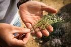 A la recherche des Herbes de Provence